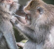 Ubud Monkey Mates Sticker