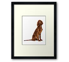 Young irish setter Framed Print