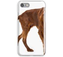 Young irish setter iPhone Case/Skin