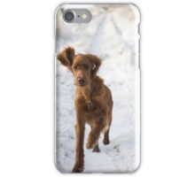 Young irish setter running in snow iPhone Case/Skin
