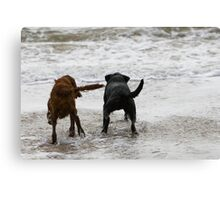 Two dogs paddling  Canvas Print