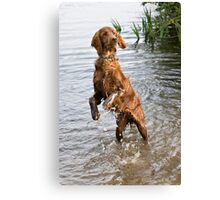 Young irish setter playing in water Canvas Print