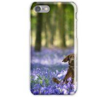 Irish setter in bluebell wood iPhone Case/Skin
