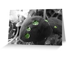 Sweet pea leaf with water Greeting Card