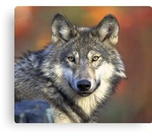 Smiling Wolf - Oil Painting Canvas Print