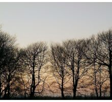 TREES SILHOUETTED AGAINST WINTER SKY SUNSET Sticker