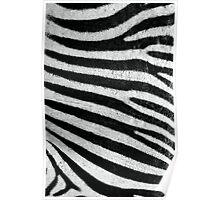 Zebra Style Poster