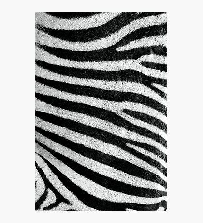 Zebra Style Photographic Print