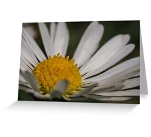 Macro / Close up of a daisy / flower potography flaura Greeting Card