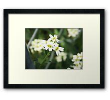 Backyard Blooms- Little White Flowers  Framed Print