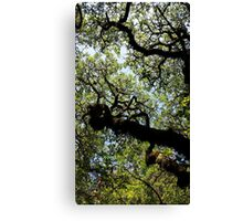 Winding Branches Canvas Print