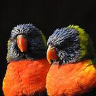 Rainbow lorikeet by StudioCorvid