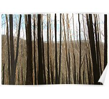 Joe Mortelliti Gallery - Burnt out Alps, near the Basalt Knob Track, Victoria, Australia. Poster