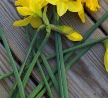 Daffodil Bouquet on Wooden Planks Sticker