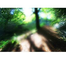 Dreampath. Stackpole Estate Woodland.Round Glass Filter Photographic Print