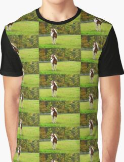 Charming Pinto Horse Graphic T-Shirt