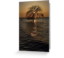 Lone tree in the lake, Torricella, Lago Trasimeno, Umbria, Italy Greeting Card