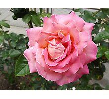 Flower Close-Up, Liberty Community Garden, Lower Manhattan, New York City Photographic Print