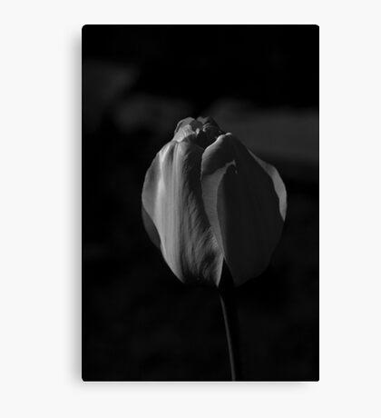 Monochrome Tulip Canvas Print