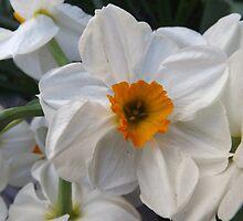 Flower Close-Up, New York City by lenspiro