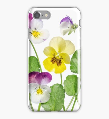 Violas iPhone Case/Skin