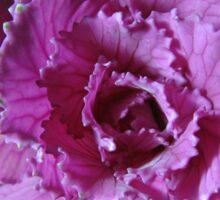 Pretty in Purple - Ornamental Cabbage Macro Sticker