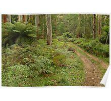 Joe Mortelliti Gallery - Dawson City track, near the Haunted Stream, alpine Victoria, Australia.  Poster