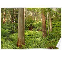 Joe Mortelliti Gallery - Green carpet, Dawson City, on the Haunted Stream, alpine Victoria, Australia. Poster