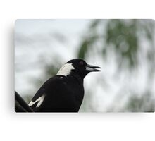 The warbler Canvas Print