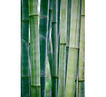 Green Zen Bamboo Stalks Photographic Print