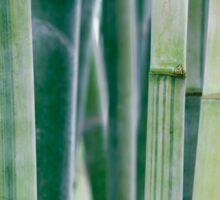 Green Zen Bamboo Stalks Sticker