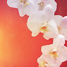 Orange Orchid by Deborah McGrath