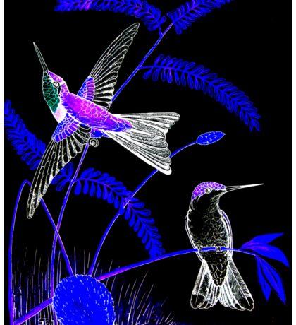 Mid-Night Humming Bird Sticker