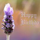 Misty Lavender  by Mary Trebilco