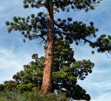 Ponderosa Pine and Granite Boulders Sticker
