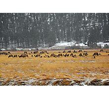 RMNP Winter Study 7  Photographic Print