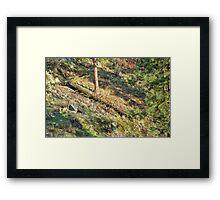 Tree Down Hillside Framed Print