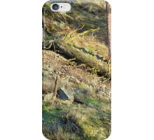 Tree Down Hillside iPhone Case/Skin