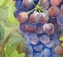Grapes Watercolor Painting Sticker
