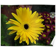 Blooming Yellow Poster