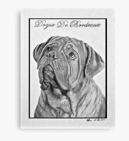 Dogue De Bordeaux French Mastiff by Leslie Berg Canvas Print