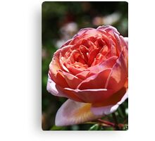 Pink Rose Profile Canvas Print
