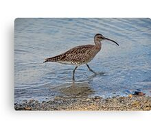 The Mauritius Collection - Waterbird Canvas Print