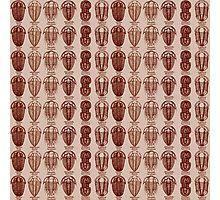 Trilobite Species Pattern Photographic Print