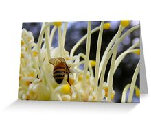 Honey Bee on Grevillea Greeting Card