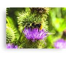 bee on thistle with insects Canvas Print