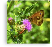 Butterfly on a thistle with orange insect Canvas Print
