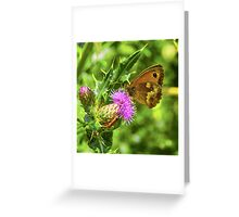 Butterfly on a thistle with orange insect Greeting Card