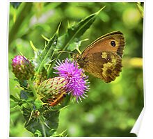 Butterfly on a thistle with orange insect Poster