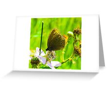 Wild butterfly on a flower Greeting Card
